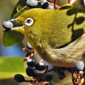 木の実を食べる小鳥たちの特集