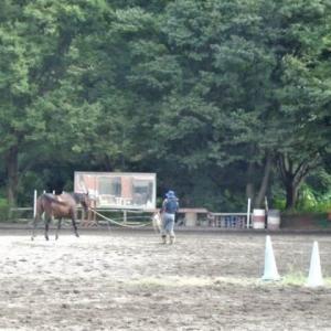 「今日の日記、人と馬が遊んでいる様子を見てくつろいで来ました」