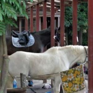 「乗馬は欧米の趣味、日本では普及しにくい趣味」