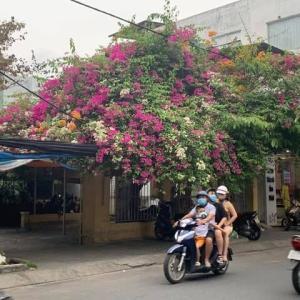 「ベトナム・ダナンの街中に溢れる南国の花たち」