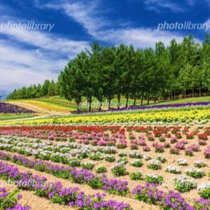 「秋の北海道の花畑の写真です」