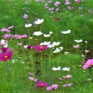 「秋の花々の写真をお楽しみ頂けたら嬉しく存じます」