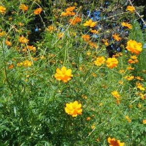 「小金井公園へ花の写真を撮りに行きました」