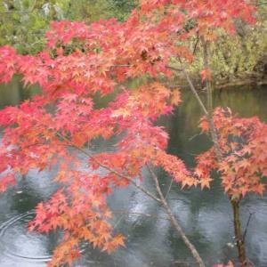 「福島県桧原湖近くの五色沼の紅葉風景をお楽しみ下さい」