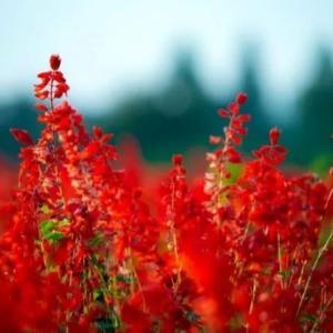 「濃厚な美の秋の花の写真をお楽しみ下さい」