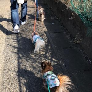 暖かい日のお散歩