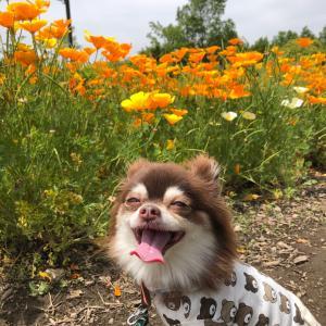 お花いっぱいの公園