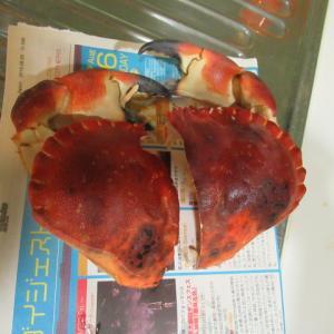烤麩の蝦醬焼き