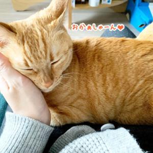 愛情のカタチは猫それぞれ