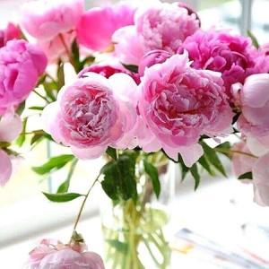 こういう時こそお花をお部屋に飾ってみませんか?