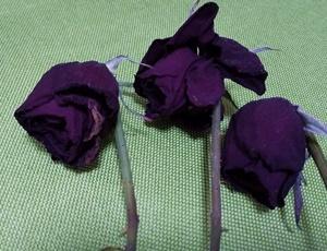 頂いたお花をドライフラワーにしてみました♪