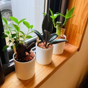 ◆梅雨入りだしコロナだし、家にグリーンだよ!