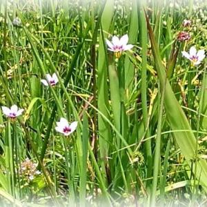小さな花の国から