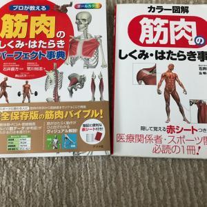 またまた、解剖学