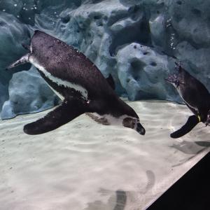 DMMかりゆし水族館にいってきました。
