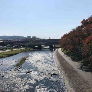 日帰り京都旅!白い象さんとハードロックカフェ京都!