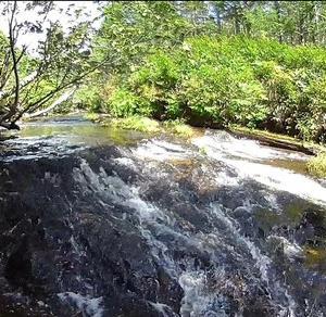 小樽内川上流は渇水の影響か大苦戦