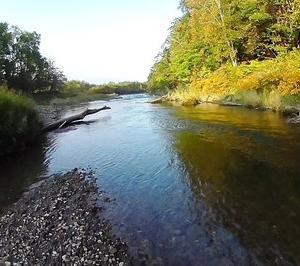 尻別川上流で苦戦も支流で虹鱒好調