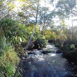 ボサに覆われた尻別川支流の湧水河川へ