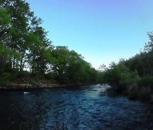 今年初のフライ釣行は尻別川