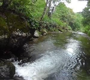 夏枯れで本流は厳しくとも渓流は好調<br />