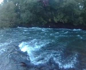 雨で増水の尻別川上流でウェットフライ<br />