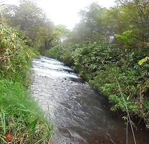 <br /> 今季初の湧水河川でドライフライ<br />