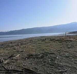 苫小牧東港でサクラがポツポツ