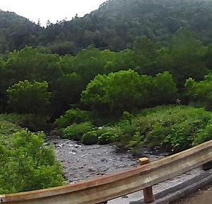 小樽内川で40センチ級岩魚をバラす