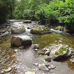 渇水避けて水量多い余市川支流へ<br />