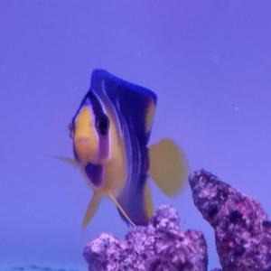 海水魚飼育は見ていて飽きないです