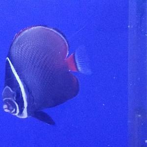 おすすめの海水魚達です