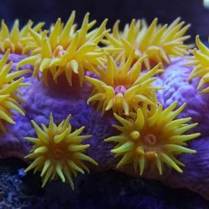 綺麗なサンゴ達✨