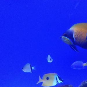 海水魚入荷してきましたぁ