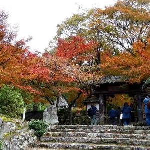 高源寺の紅葉が見ごろ 2019.11.13