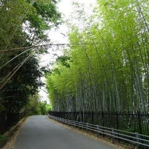 隠れた里、西ノ岡竹林道 竹の径 2019.05.31