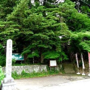 善祥寺に咲く蓮と睡蓮 2019.07.03