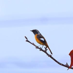 紅葉・黄葉・滝・野鳥^^v