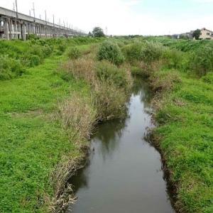 散歩道の植物(夏から秋へ)~栖吉川堤防(1)