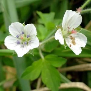 散歩道の植物(夏から秋へ)~栖吉川堤防(3)