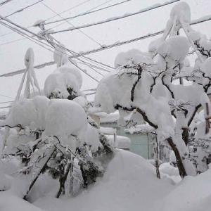 1月10日、大雪の庭