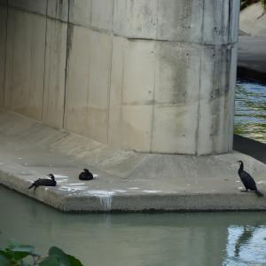 【静岡県浜松市】中区街中の野鳥撮影より