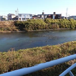 【静岡県浜松市】2020年元旦の野鳥観察・撮影の続き その3
