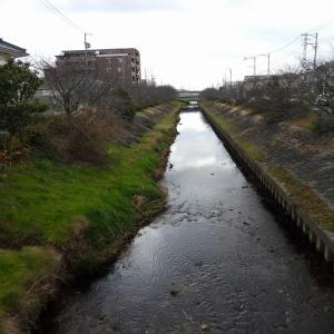 【静岡県浜松市】芳川と馬込川の野鳥観察・撮影より