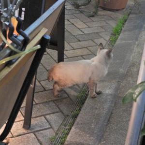 【静岡県浜松市】老舗の喫茶店 サイモンにやってくる仔猫ちゃん