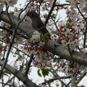 【静岡県浜松市】花と緑の街 はままつ ご近所を散策しました