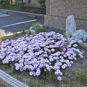 【静岡県浜松市】花と緑の町 はままつ JR浜松駅前 高層マンション歩道の花壇