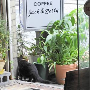 【静岡県浜松市】シンガーソングライターBemyさんのピアノ弾き語りライブを覗きに来た猫ちゃん