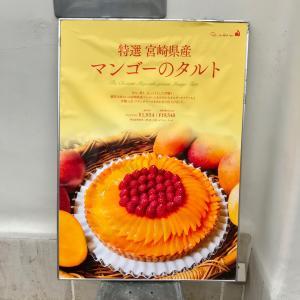 【キルフェボン】特選 宮崎県産 マンゴーのタルト