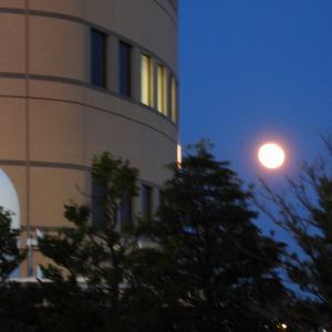【静岡県浜松市の街中】満月のいる風景
